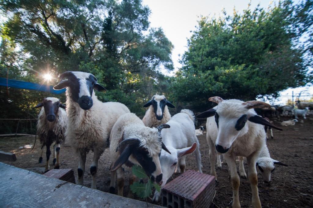 vrachos organic farm corfu